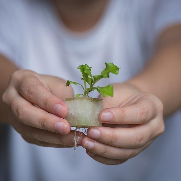 Semis de légume Jardin Hydroponique d'Intérieur